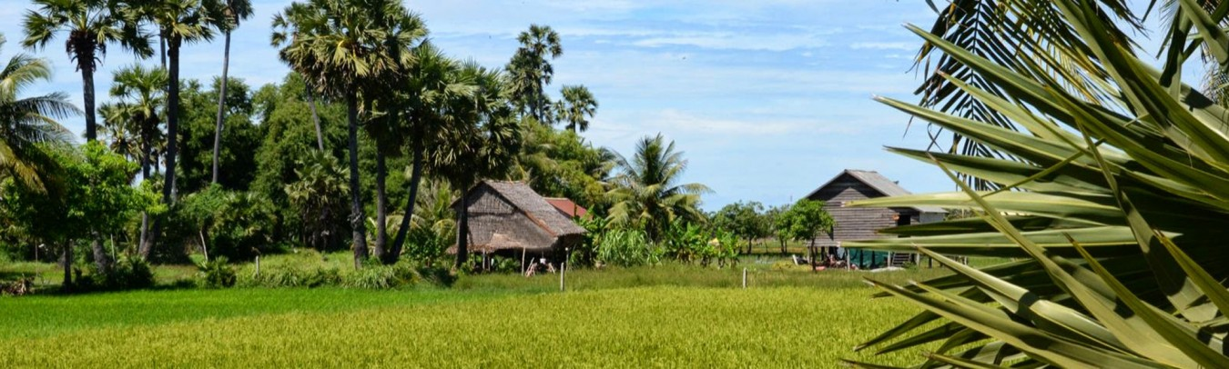 paddy-fields