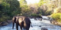 Wildlife in Laos, former Kingdom of million elephants
