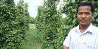 Pepper farmer, Kep Province